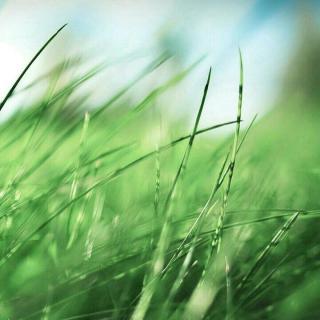 壁纸 草 成片种植 风景 绿色 植物 种植基地 桌面 320_320